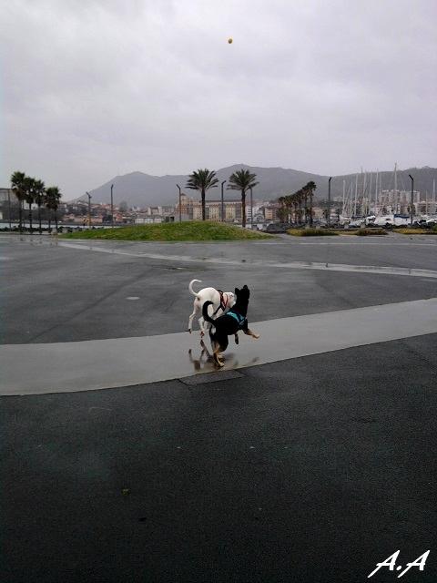 Jeu de balle sous la pluie