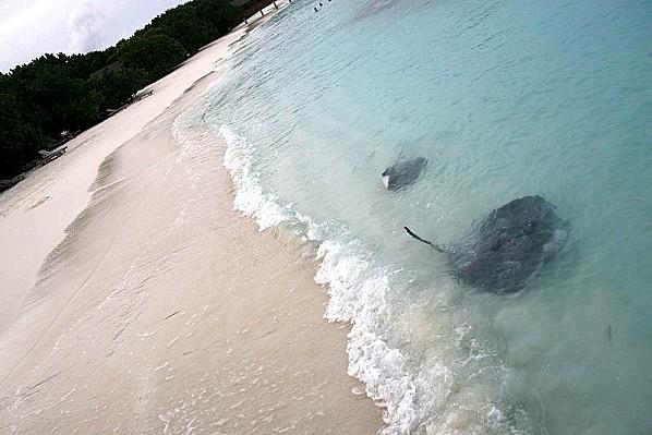800px-Maldives_animals_23.jpg