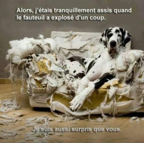 Un humour de chien !!!
