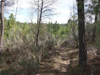 Le sentier dans la forêt