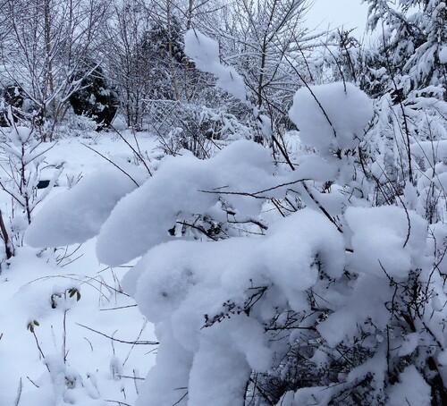 févier eeeeeeeet enfin un peu de neige pour marquer l'hiver .