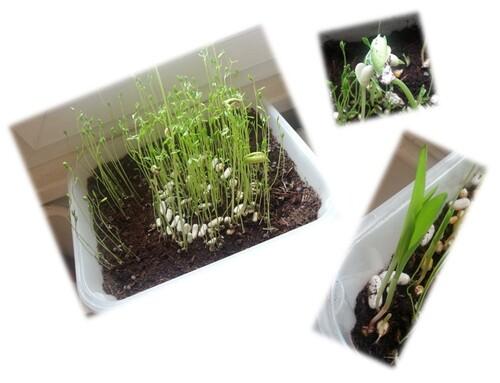 Planter en classe