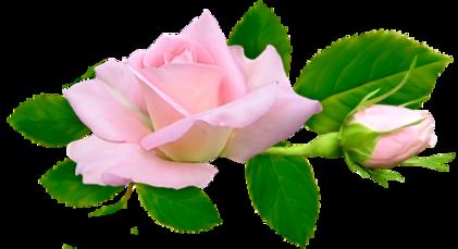 La rose est moi