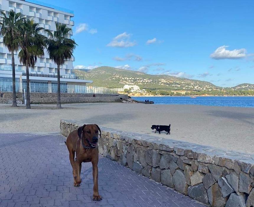 Fin décembre à Majorque
