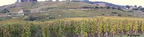 Dans les vignes de Cornas en automne - 1