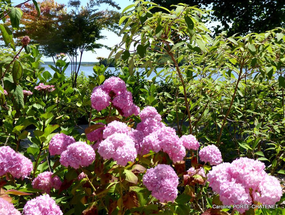 *Juin 2019, Promenade fleurie*