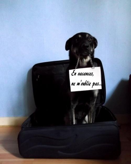Voyager avec son chien , sinon rien...