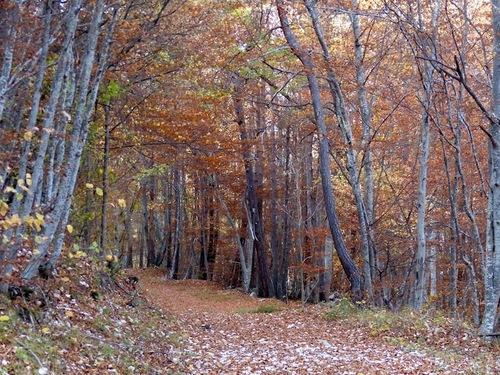 L'automne à Saint Jean - Montclar (04)