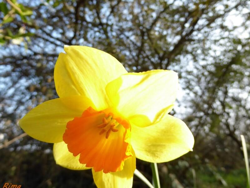 Nature en jaune,