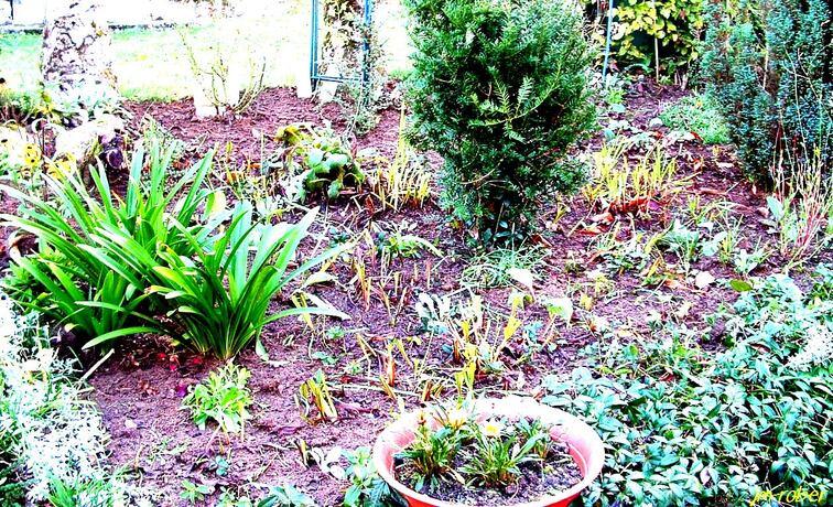 Jardin:  Mon auxilliaire Bufo-Bufo, en Occitan «Lo Pautut» ou  «Lou Grapaud»