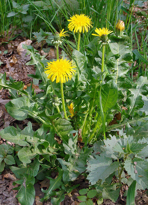 "Weeds Short Film"" by Kevin Hudson"