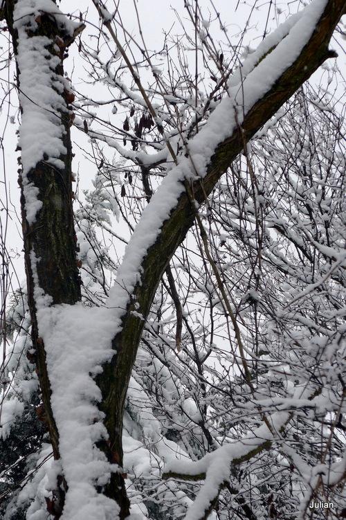 La neige (2)