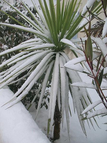 plantes enneigées