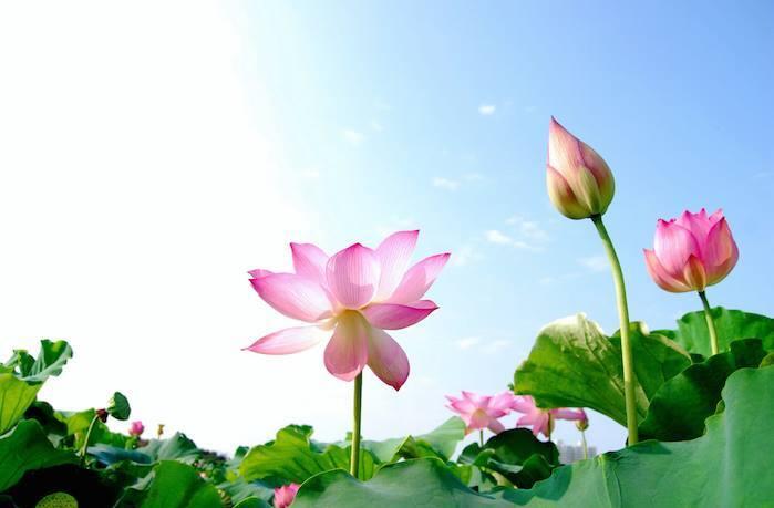 Résultats de recherche d'images pour «cultivez votre jardin intérieur»