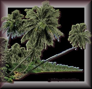 Tubes d'arbre 2970