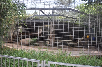 zoo allemagne2 355