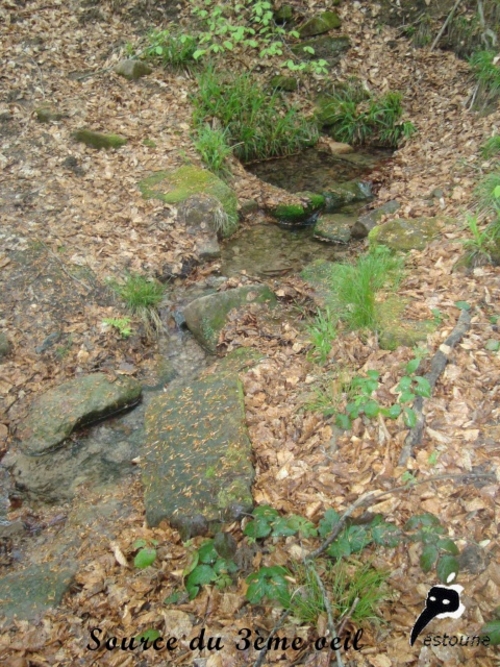 Les 8 fontaines celtiques de la forêt du Banney
