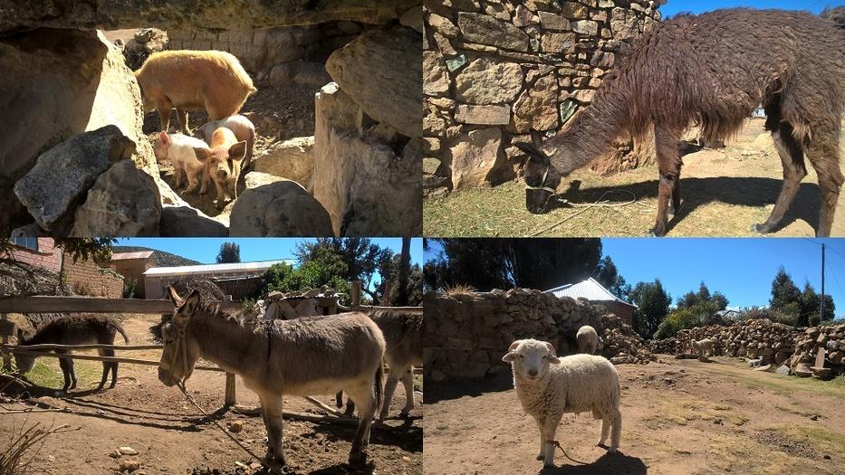 les animaux de l'isla del sol