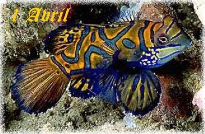 1er Avril et son poisson, une tradition vieille de 450 ans