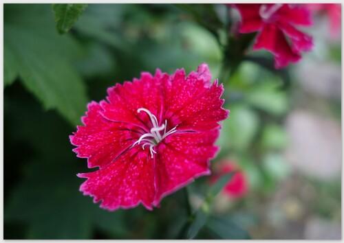 Fuchsia et compagnie...