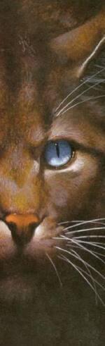 Marque page Étoile du Tigre et autres chats de ce pelage