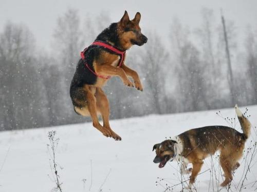 (-*♥*-) Ce chien a attendu pendant sept jours au bord de la route, parce que son maître lui avait dit de ne « pas bouger ».