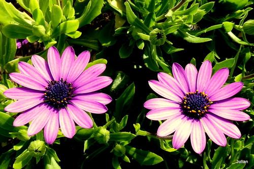 De belles fleurs !