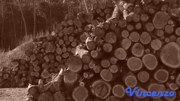 decoupe bois