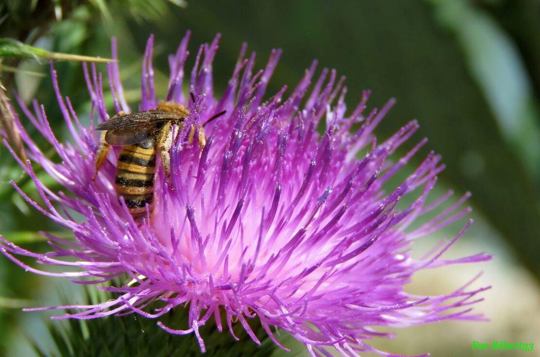 une abeille et des fleurs