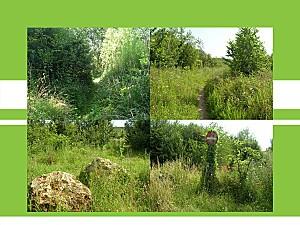 jardin sauvage1