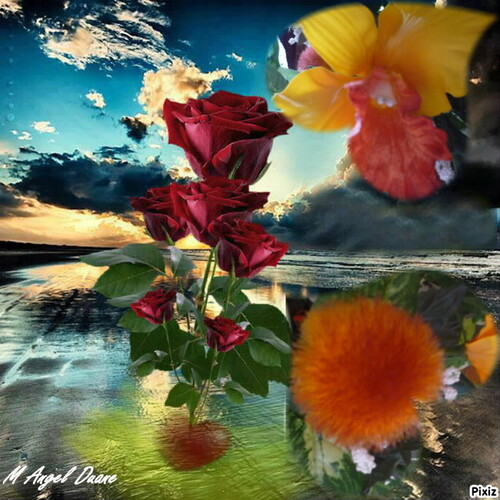 Aux Couleur Des Fleurs