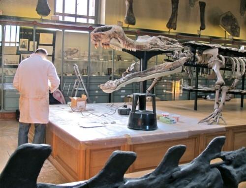Sarcosuchus 0380