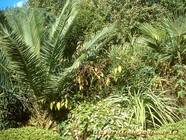 Langon (gironde) photos de la nature bien verte pour la saison