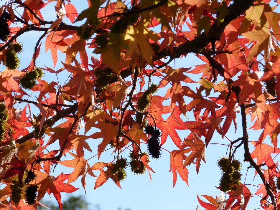Un octobre si beau ...