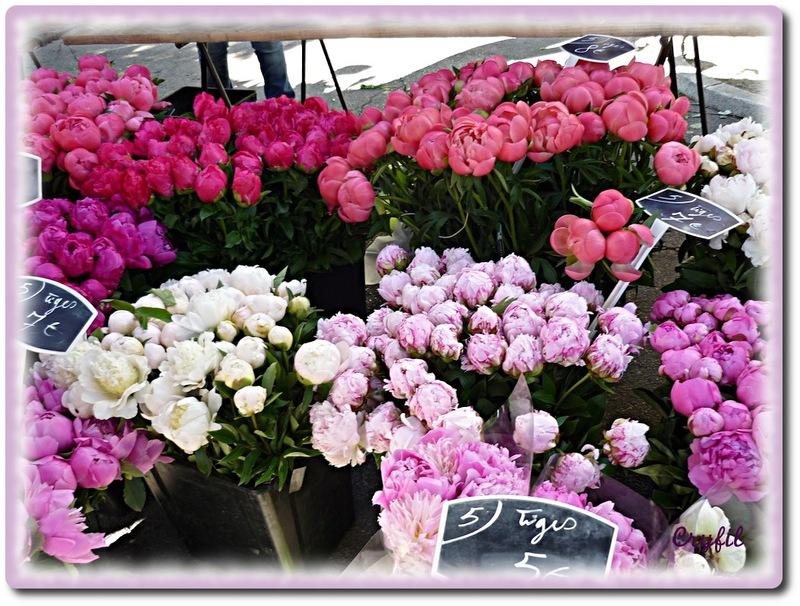 Un tour au marché aux fleurs
