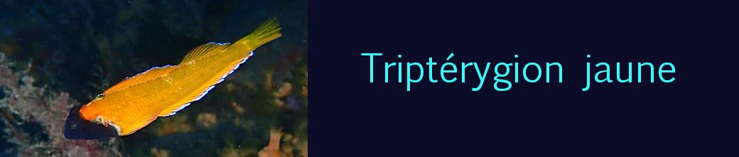 triptérygion jaune