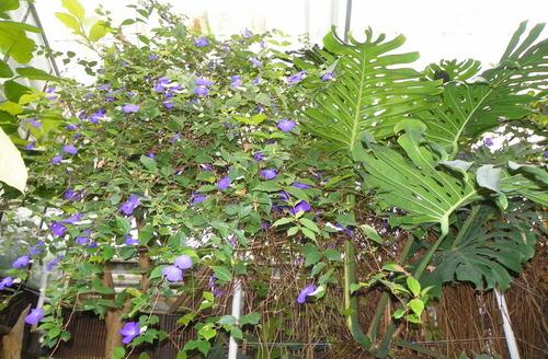 Le Jardins des Plantes à Caen ( 1 )