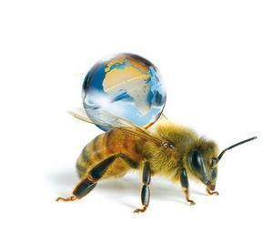 """""""Si l'abeille disparaissait de la surface du globe, l'Homme n'aurait plus que quatre années à vivre"""" Einstein"""