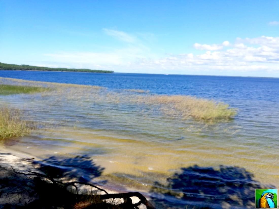 Lacanau : vers le lac d'Hourtin et de Carcans 2/2