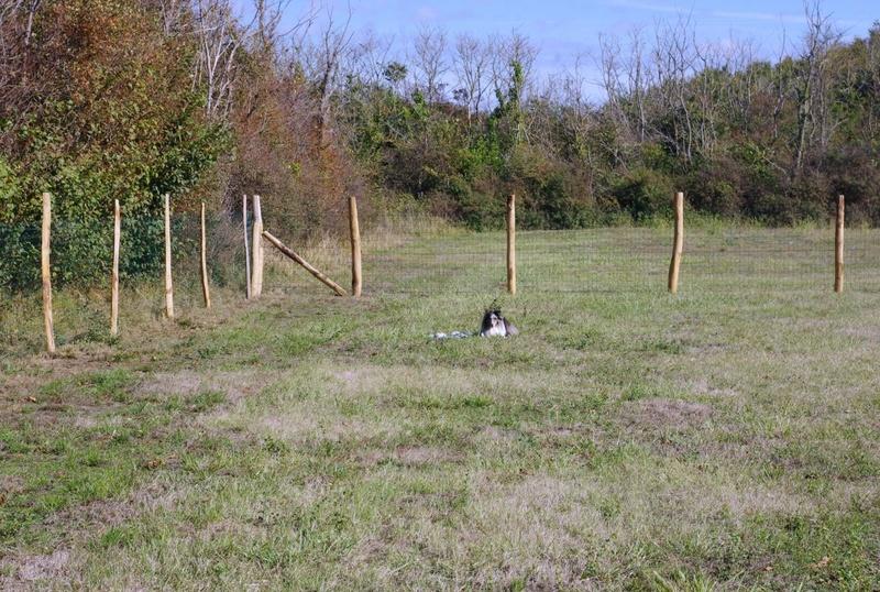 """La clôture du terrain es """"Cabots """" aux prés Valet à St Georges d'Oléron"""