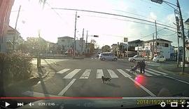 Japon : un chat aide une personne âgée à traverser !