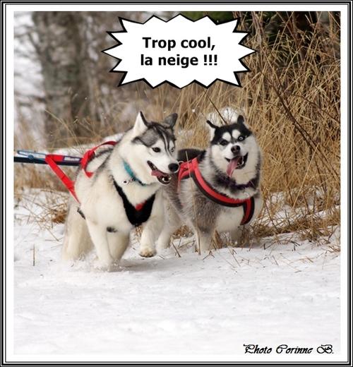 Vos Huskys à la neige