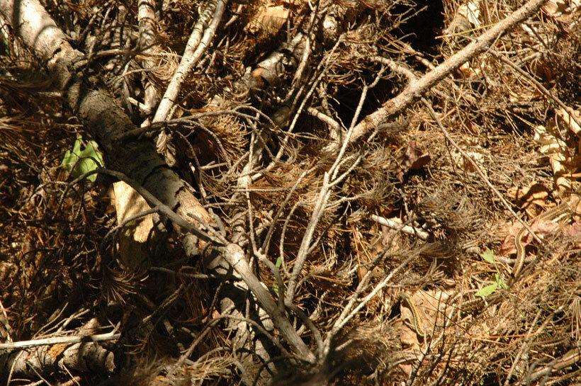 23-camouflages-spectaculaires-danimaux-qui-ne-manquent-pas-de-talent22-2
