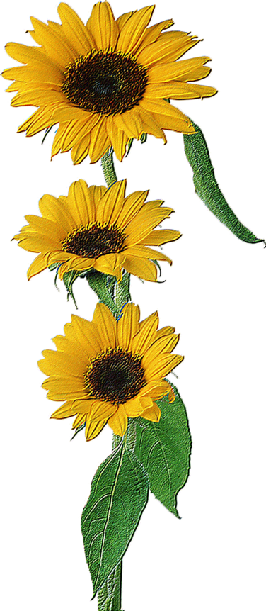 tubes fleurs en relief