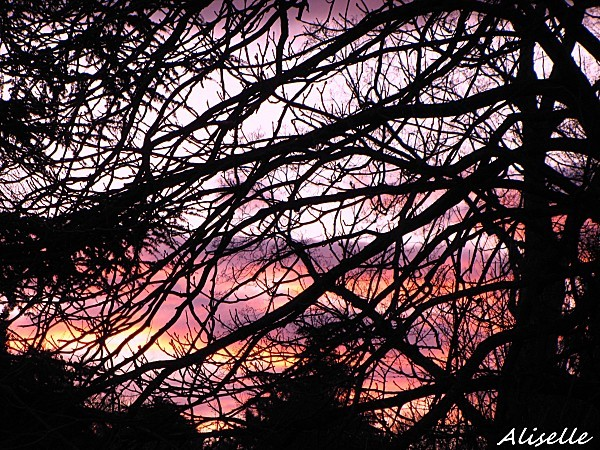 Soleil-couchant-01-02-2010-17h49.jpg