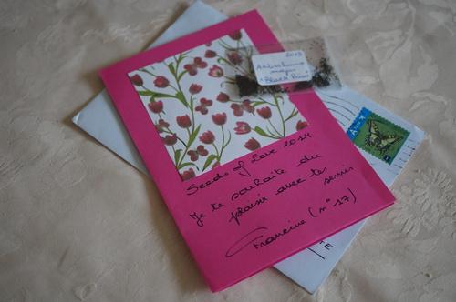 Seeds of Love : petit sachet, grand bonheur, semaine de folie