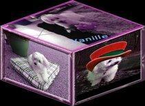 Les 11 Ans de Vanille