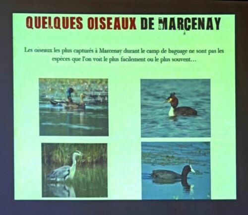 Le baguage des oiseaux au lac de Marcenay