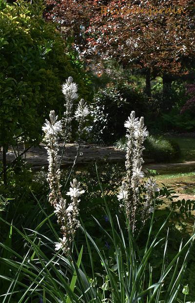 Retour au jardin Lalande