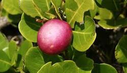 Les fruits tropicaux...